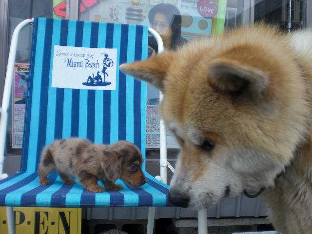 5月11日 新着子犬 089
