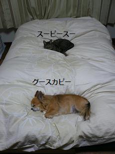 ベッドの1