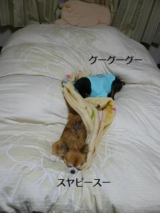 ベッドの2