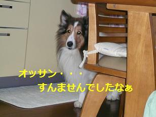 gsei1.jpg