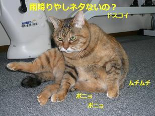 marisuke1.jpg