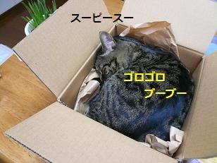 omi4.jpg