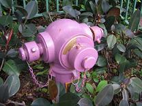 紫の消火栓(小)