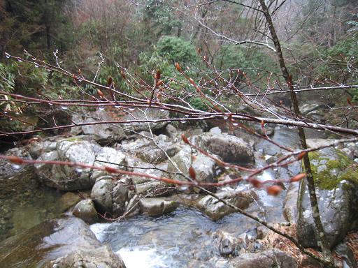 雨の澄川3