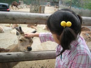 うっとり鹿