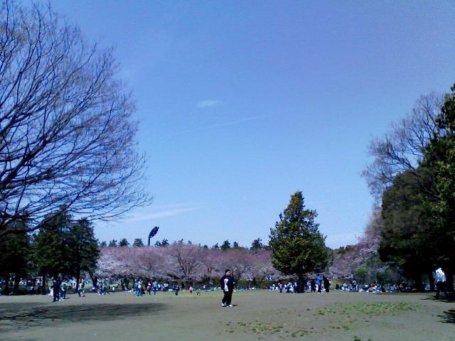 2009.4.3平塚総合公園の桜