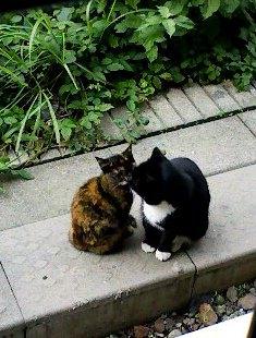 厚木駅の猫