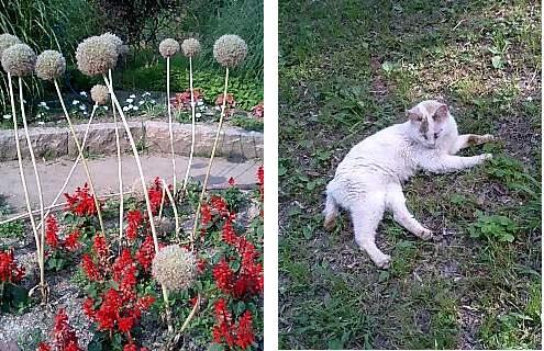 山田池花壇ーノラ