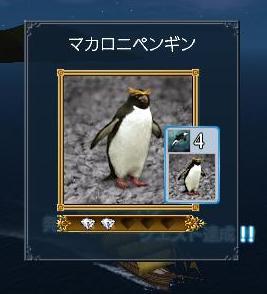 121007 043540マカロニペンギン