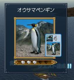 121007 051032オオサマペンギン