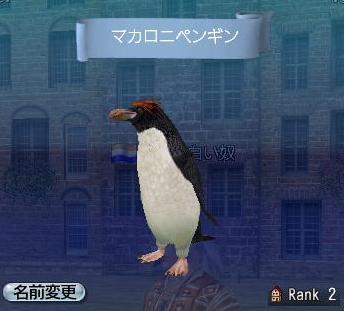 121107 210150マカロニペンギン