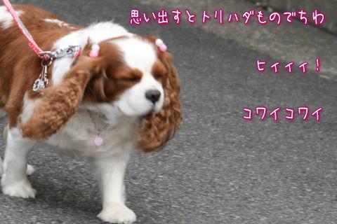 ヽ(ヽ>ω<)ヒイィィィ!!