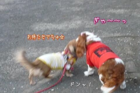 nene_6_7_9.jpg