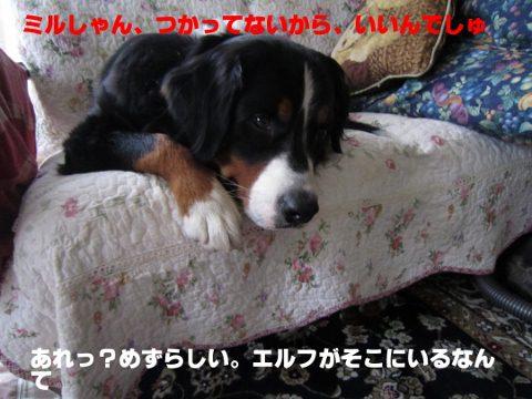 IMG_1002 (480x360)