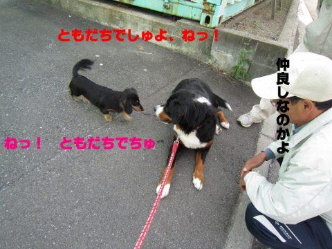 IMG_0960 (480x360)