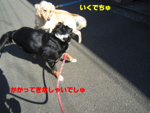 IMG_2106.jpg