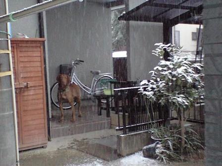 090124雪景色 7