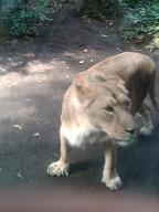 ライオン様