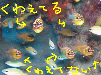 20090601_3.jpg