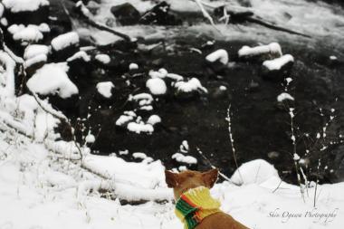 湯川-雪001