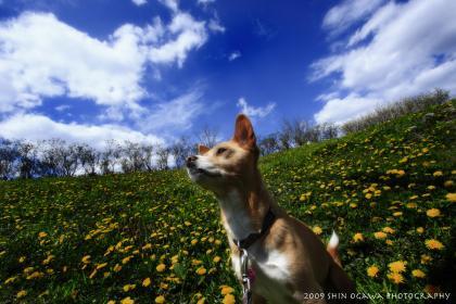 犬と花と青空と