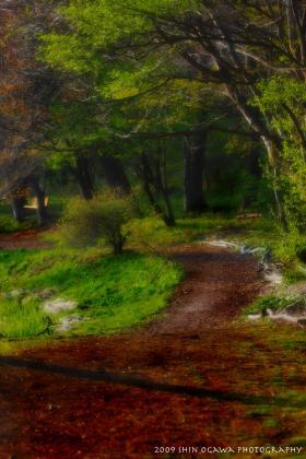 雨宮池 湖畔の路