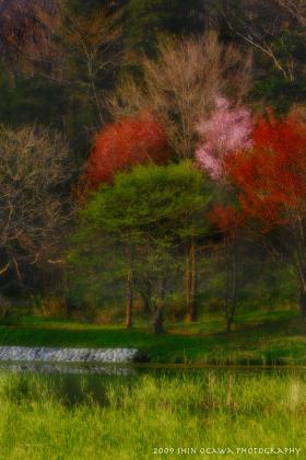 雨宮池 湖畔の木