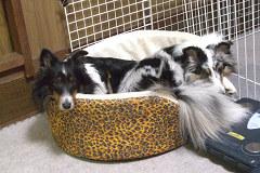 ユキ&MARINのベッドin
