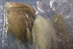 エリーの毛