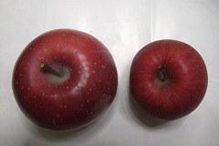 頂いたリンゴ&いつものサンふじ