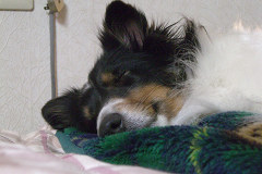 ユキの寝顔
