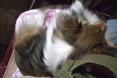 膝枕で寝る凛