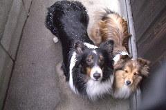 お庭で雪まみれの二人