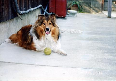 19941113 ボール大好きエリー①