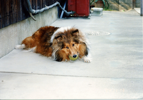 19941113 ボール大好きエリー②