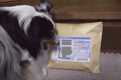 蜜さんからの郵便物