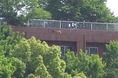 病院の屋上にワンコさん