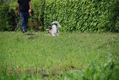 ビビリン犬①
