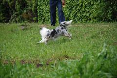 ビビリン犬②