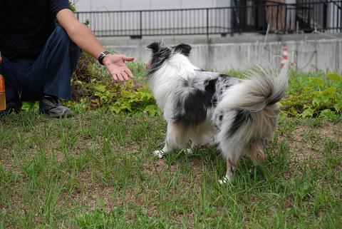 ビビリン犬③