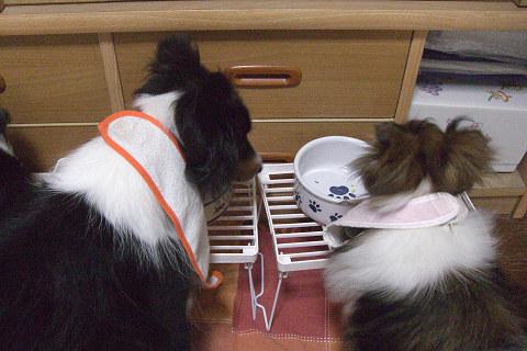 MARINのお皿に凛ちんが