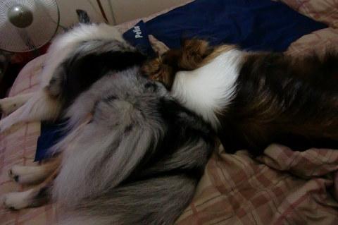 MARINを枕代わり