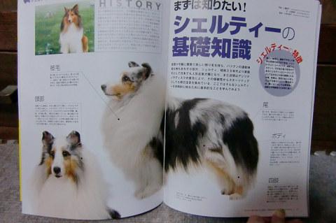 成犬のモデル