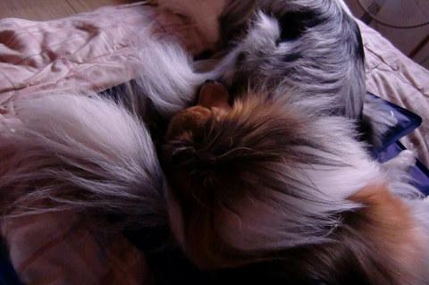 尻尾の枕②