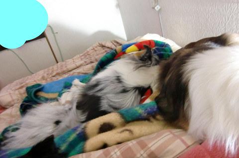 飼い主の足を枕にする子