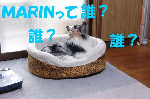 MARINって誰?