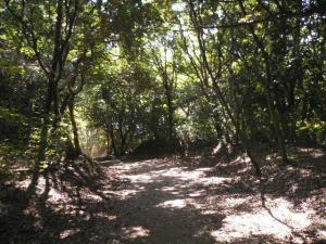 緑の分化園