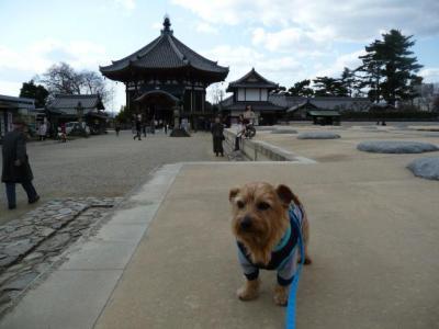 興福寺とジュ