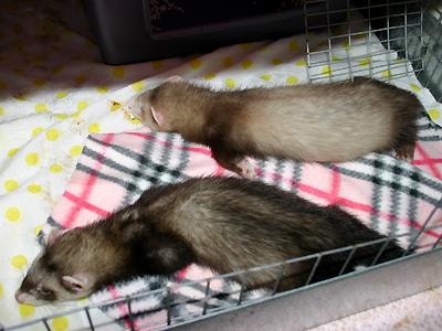 『眠いぜ・・・』『寝ます~Zzzzz...』