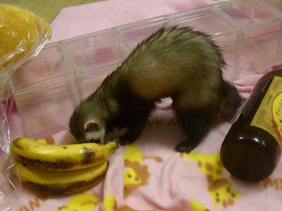 『これ、バナナよね?』